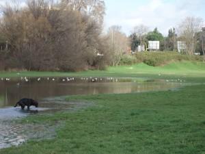 Luoghi segreti a Roma lago effimero viale ionio