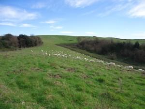 Lago di Martignano altipiano sommitale con pecore