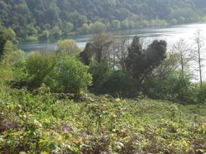 la riva boscata del lago di Martignano