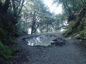 la seconda tagliata collega il lago di Martignano con il bosco esterno