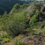 le formazioni rocciose che precedono Belmonte nel parco di Veio