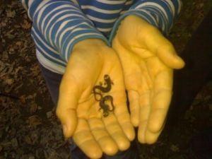 La Cascata dell'Inferno nel Parco di Veio - le salamandrine
