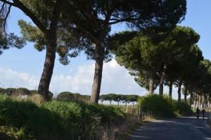 il paesaggio nei pressi di Roma La tenuta della Cesarina