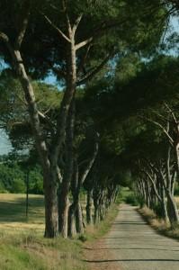 il paesaggio nei pressi di Roma strade bianche a Settebagni