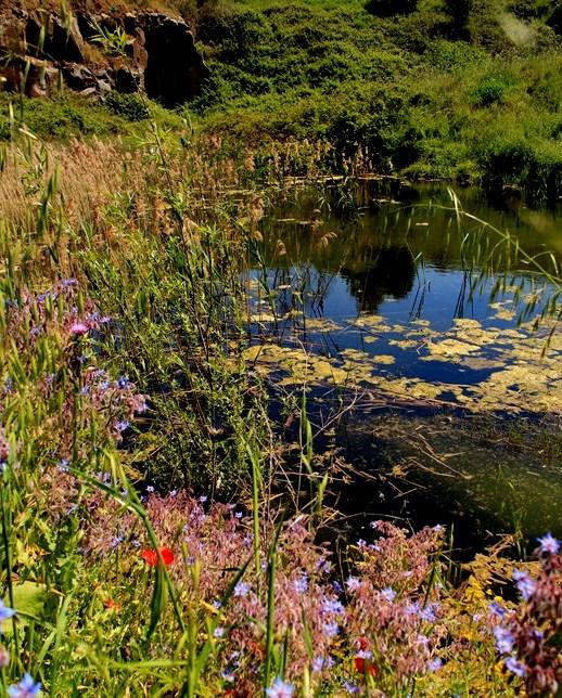 Il Lago di Vallerano presso Decima Malafede
