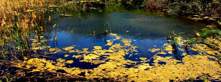 Lago di Vallerano - presso via di Vallerano