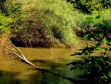 il lago segreto del pineto