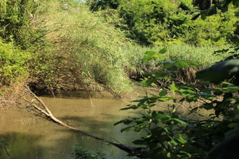 laghi segreti a Roma - il lago del Pineto