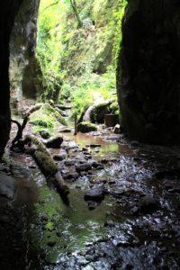 Ponte Terra - Ponti a Gallicano