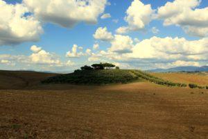 "Panorama ""senese"" alla Marcigliana"