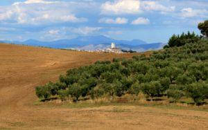Monterotondo si erge fra le colline della Marcigliana