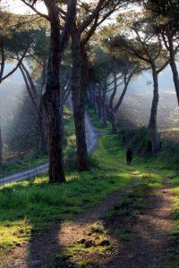 """Il paesaggio """"toscano"""" presso l'arco del Pino"""