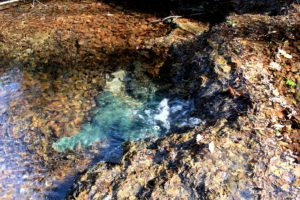 particolare del fosso dell'Acqua Raminga