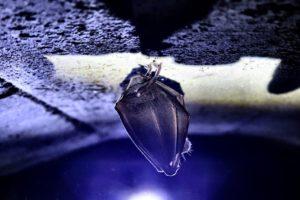particolare dei bunker di Decima Malafede 1 - foto di Luca Graziani