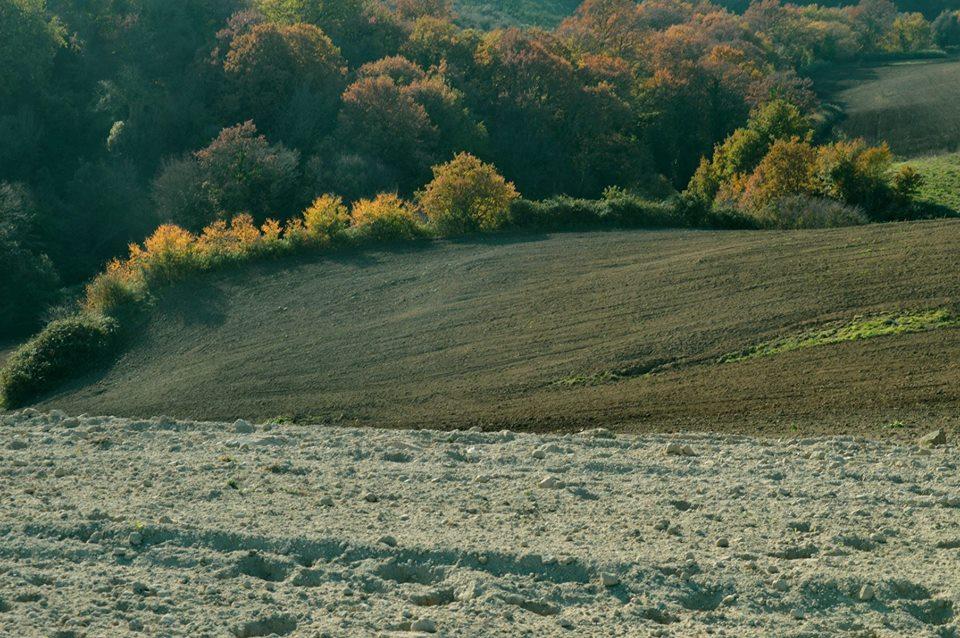 """foliage nel parco di veio - il colore """"terra di siena"""" è dovuto anche alla siccità"""