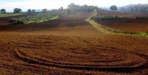 Il paesaggio nei pressi di Roma: i coltivi tra Roma e Formello presso via di S. Cornelia