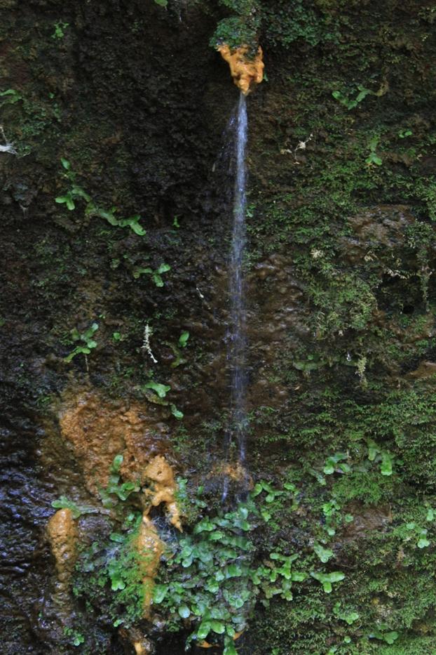 stalattiti ferrose presso la sesta cascata di Castel Giuliano