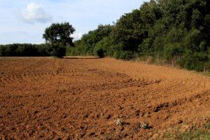 i campi che delimitano la macchia di Campo Ascolano