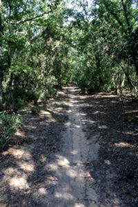 sentieri all'interno della macchia di Campo Ascolano