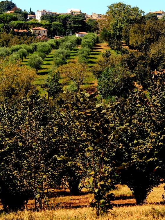 Manziana vista dagli Archi di Boccalupo