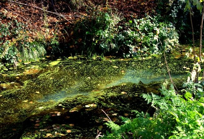 luoghi segreti e fotografia - fiume nei pressi di Castel Porciano