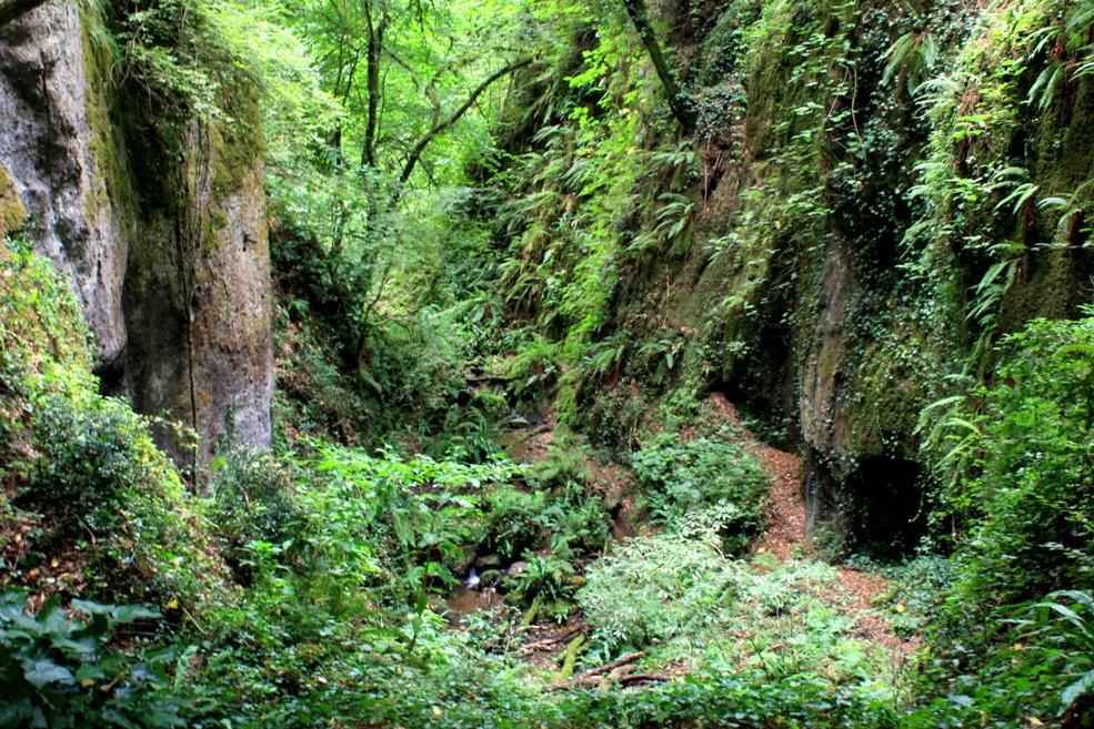 il fosso di Ponte Terra come la jungla