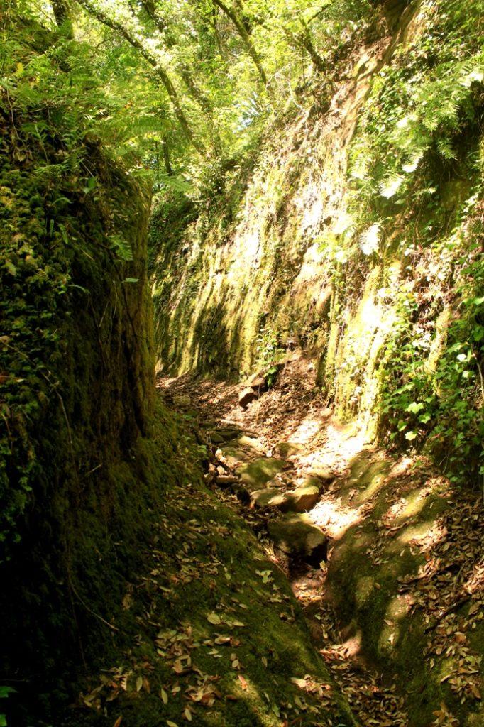 La tagliata che porta al fosso di Ponte Terra