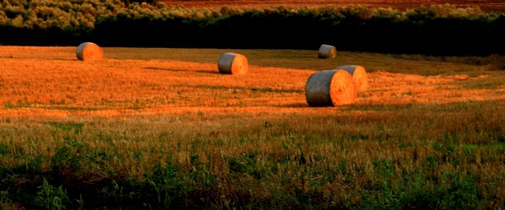 i campi coltivati presso tenuta Massara