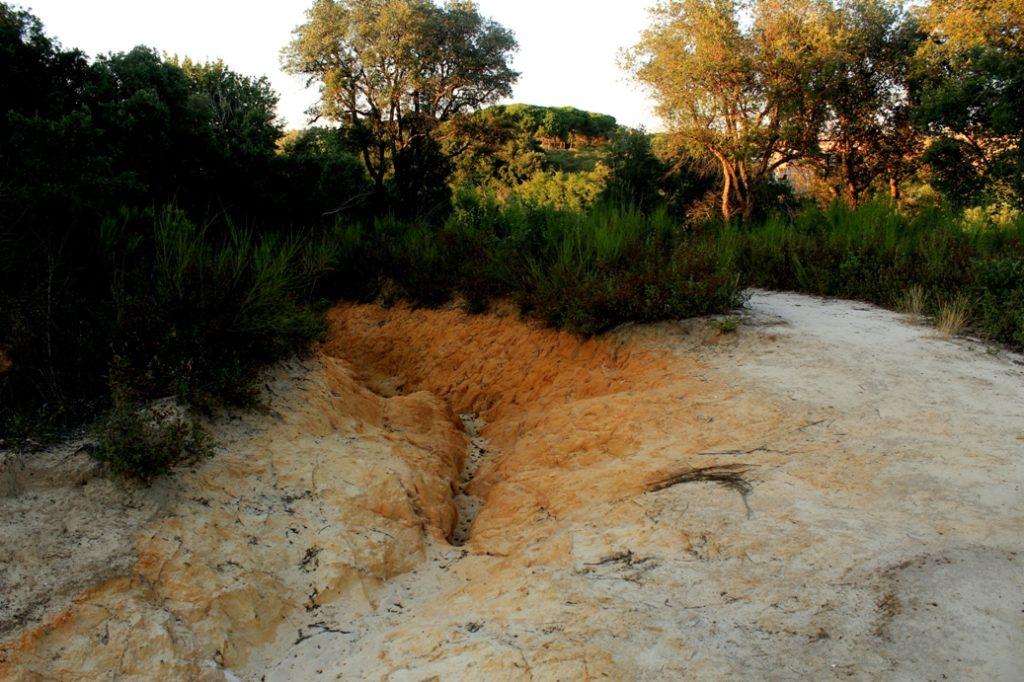 altre erosioni nel parco del Pinetoaltre erosioni nel parco del Pineto