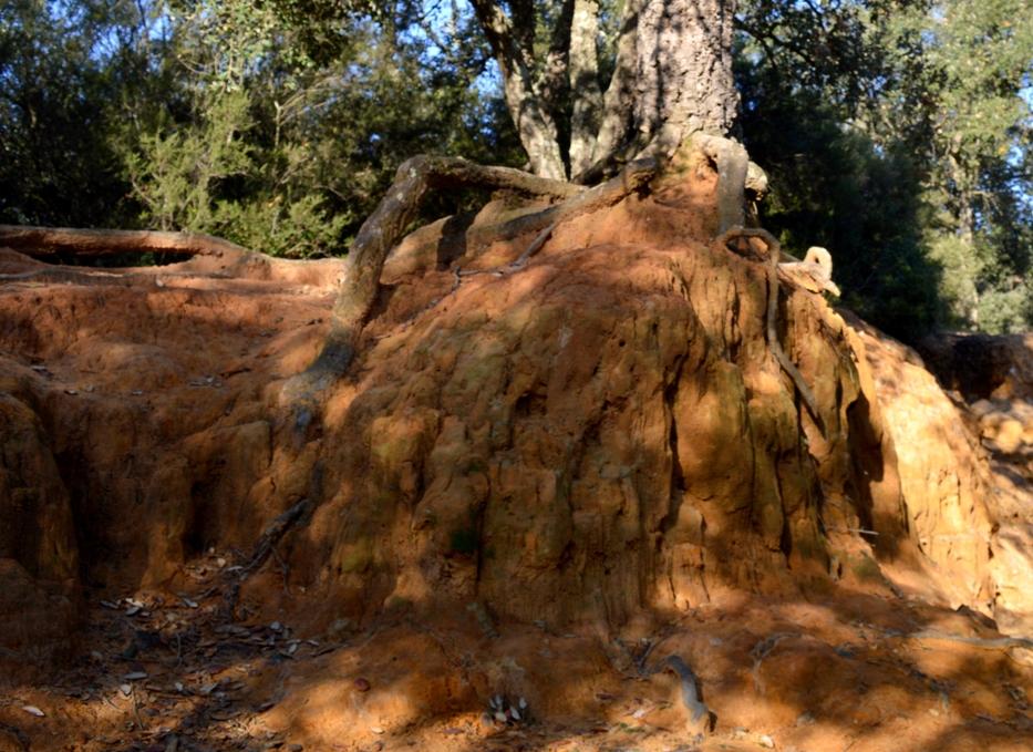 nella parte più nascosta del parco del pineto