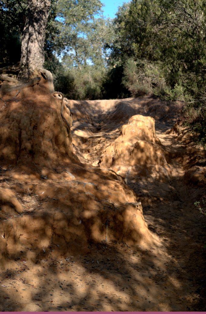 le meraviglie del parco del pineto