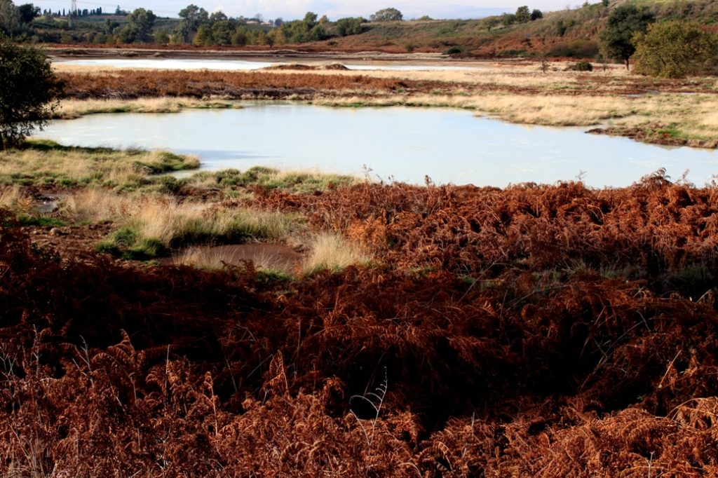 la vera specie da proteggere. L'ambiente palustre della Solforata di Pomezia - appena fuori il comune di Roma.
